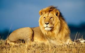 lionleader